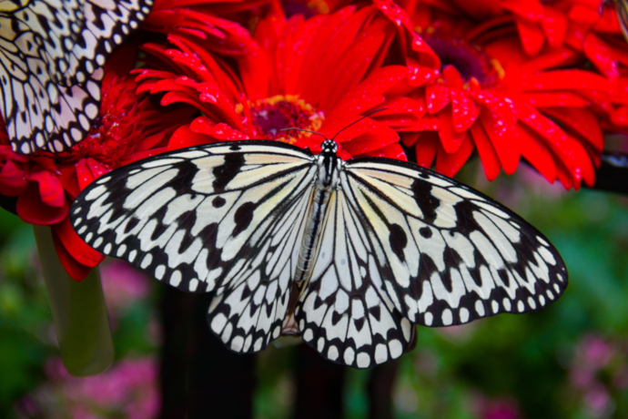 Get lost in the Butterfly Garden, the only and single butterfly garden in an airport in the world!